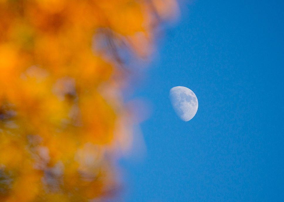 shot of the moon through orange leaves on a fall evening